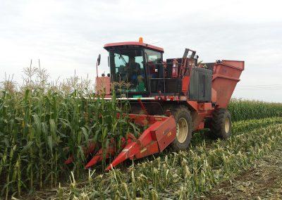 beta corn mehanizacija kukuruz